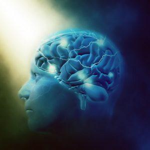 大脳と小脳